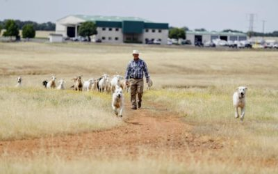 Western Grazers Featured In Record Searchlight